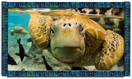 Turtle Medicine spirit animal